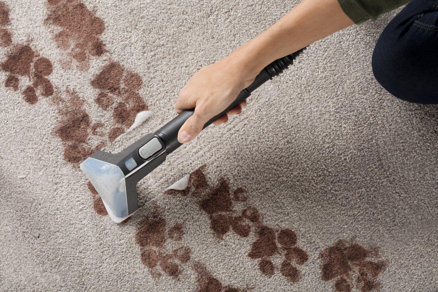 Power Scrub Elite Pet Plus Carpet Cleaner6