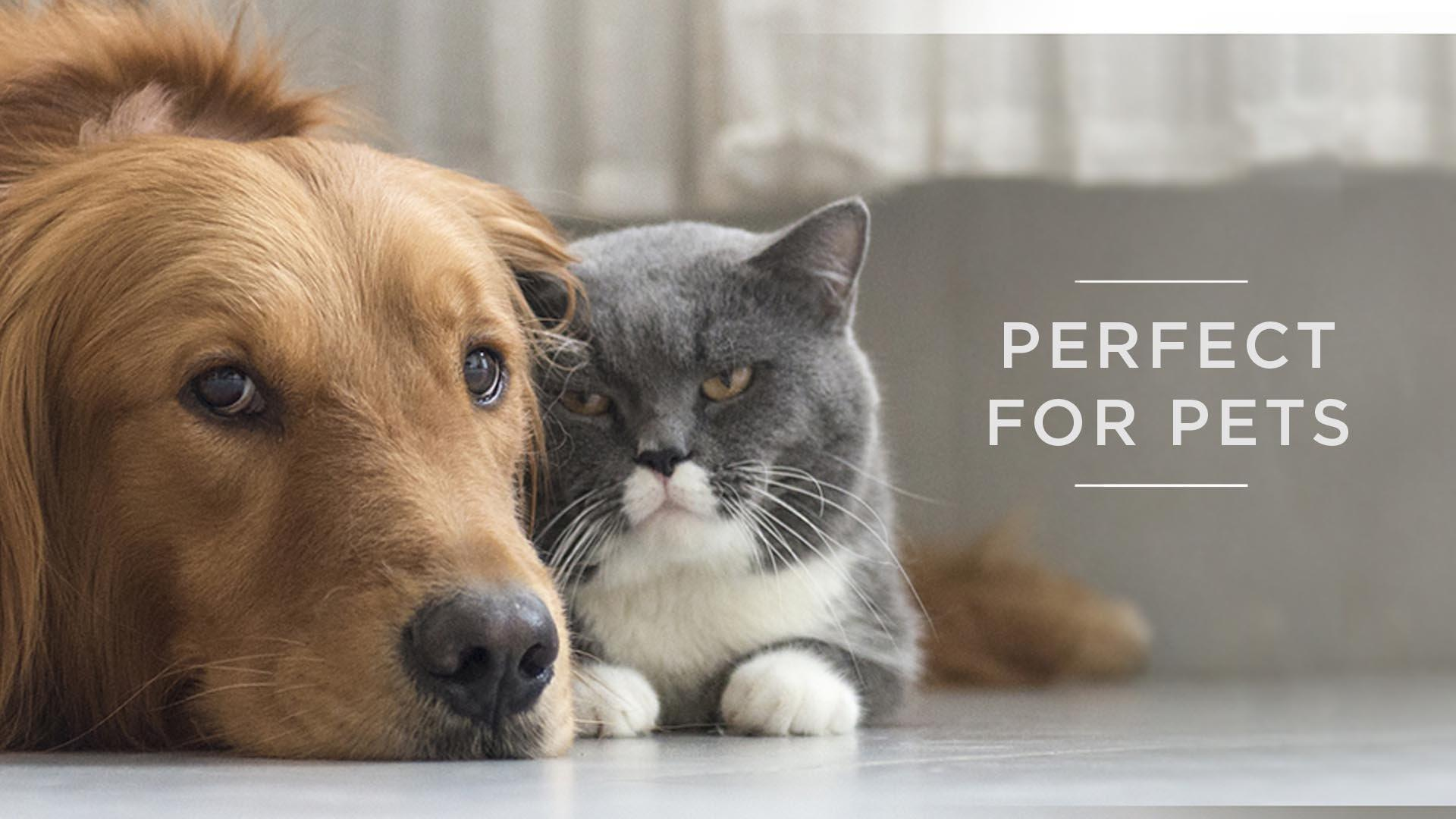Perfect for Pets